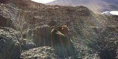 Fotografato un cane che prende il sole sulla cima del Kilimanjaro a 5895 m